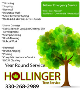 Hollinger Tree Canton Tree Serivce